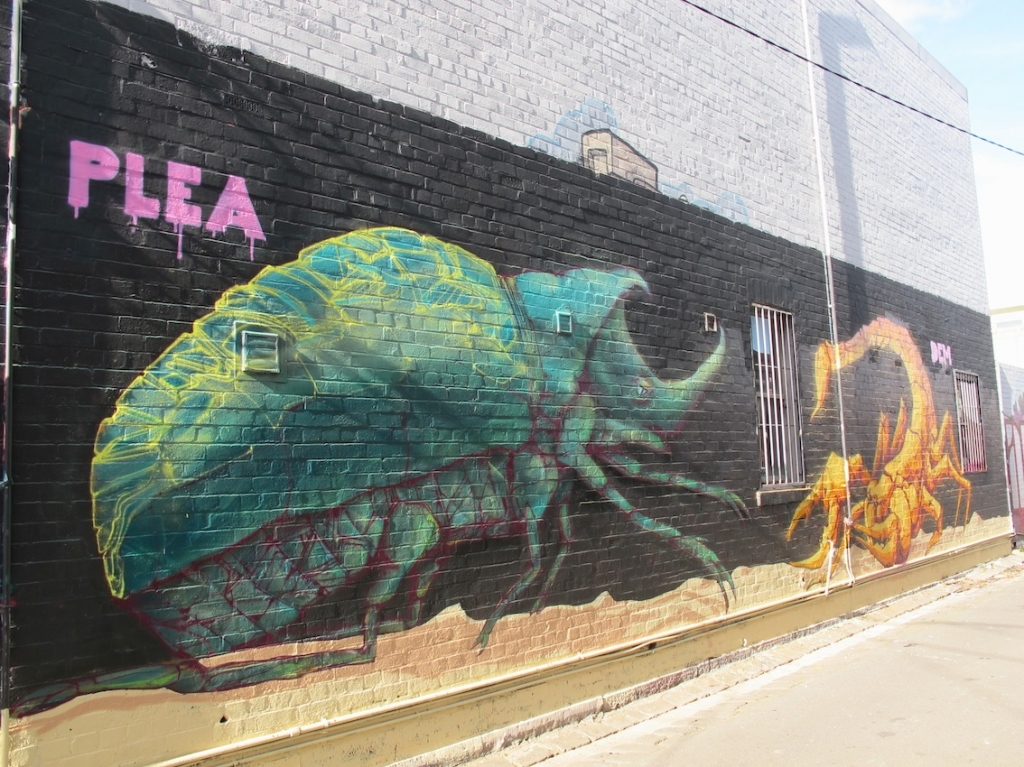 deansunshine landofsunshine melbourne streetart graffiti plea dem189 23 Snapshots – PLEA and DEM 189 – Entomology in melbourne graffiti genres exhibitions